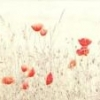 Papaver&#39;s Photo